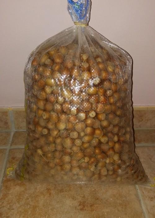 Saco de avellanas ecológicas de 5 Kg