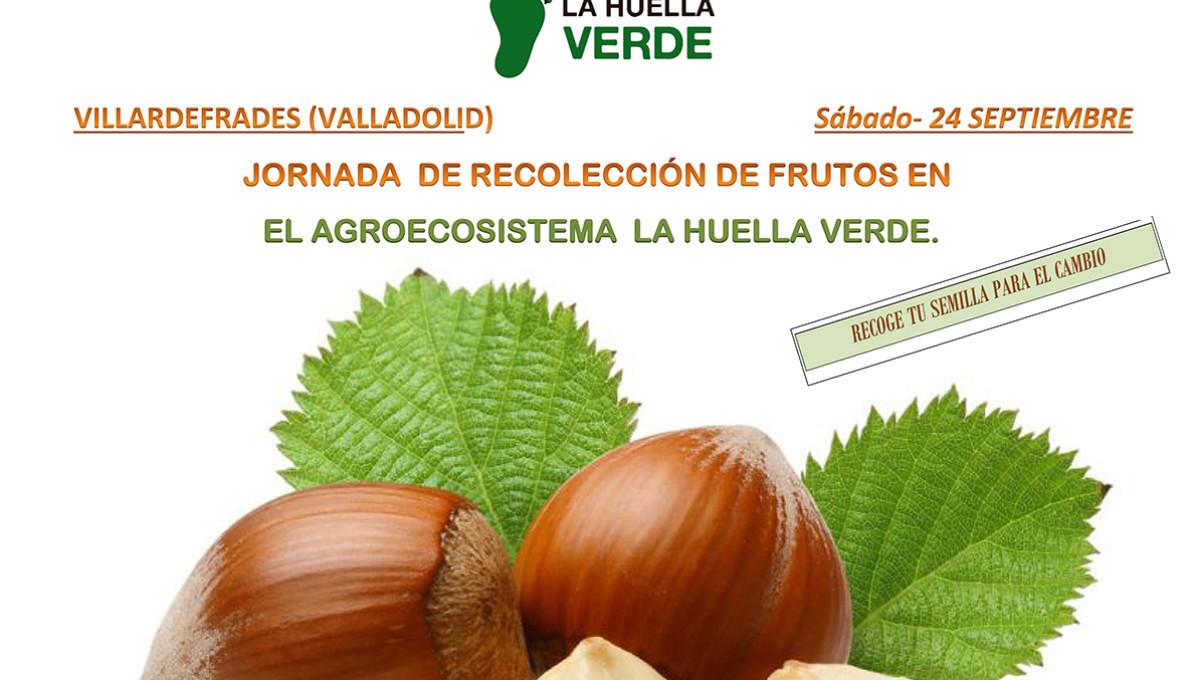 Jornada de recolección de frutos 24 septiembre 2016
